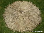 12 Foot Diameter/Round Mexican Palm Thatch Palapa/Tiki Hut Roof